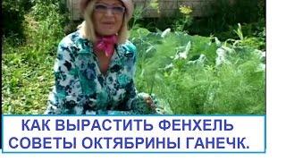 Как выращивать фенхель ч.1