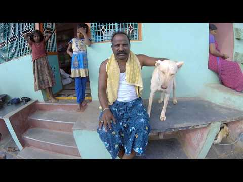 Video #5 (b): Breed Focus: The Pandikona Dog by Baarath Mani [Subtitles in English]