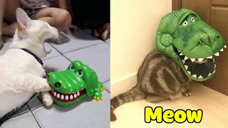 Try Not To Laugh Challenge  Funny Cat & Dog Vines compilation 2020