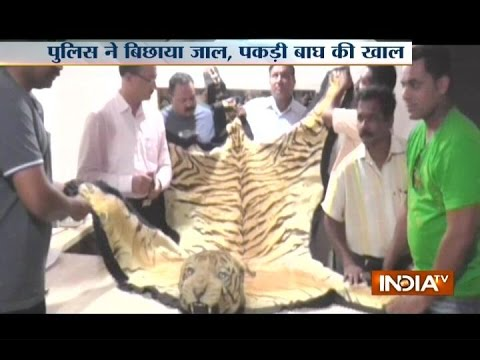 Four held for smuggling tiger skin in Maharashtra