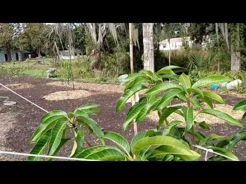 Central Florida Fruit Tree and Garden Project Update #1