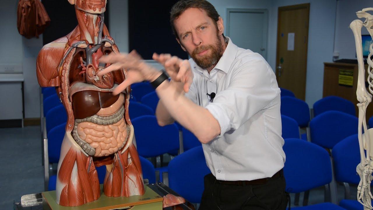 Aorta Anatomy Youtube