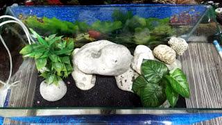 First time aquarium setup
