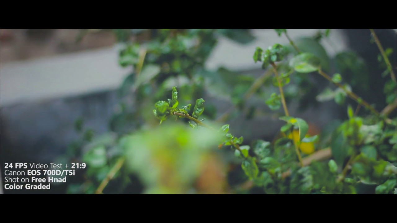 24 FPS Cinematic Test on Canon EOS 700D / T5i | Color Graded | Shaky  Jittery | Handheld Shot