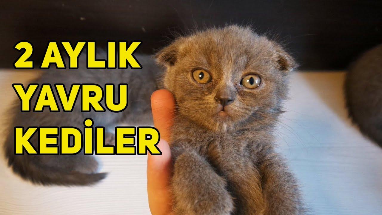 Yavru Kedilerim Yeni Yuvalarına Gidiyorlar :(  Son Video!