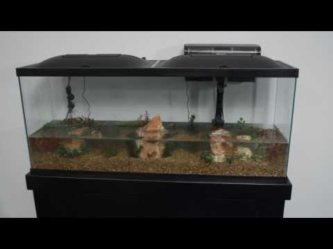 Marineland® Products — 55 Gallon Aquarium Kit Setup