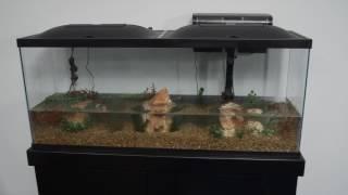 Marineland® Products — 55 Gallon Aquarium Kit Setup