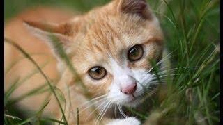 Comment jouer avec son chat et solution chat qui mord ou agressif