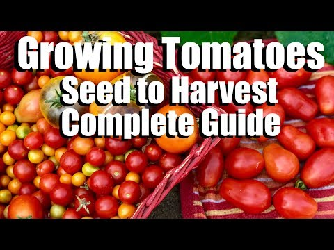 How to Grow Tomatoes from Seed to Harvest // Complete Garden