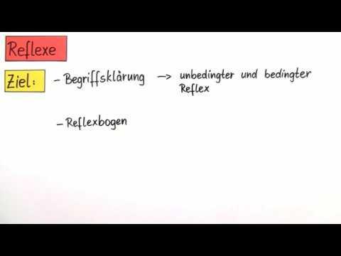 Mono Polysynaptische Reflexe By Rahman Salihie 1