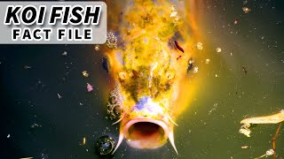 Strange Facts About Fish Junk