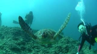 New Caledonia Shark & Turtle