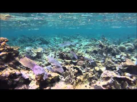 LIVE PUERTO MORELOS ( Your Snorkel Guide )