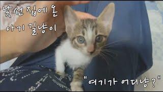 혼자 살아남은 아기 고양이 낯선 집에서 첫날 적응.Baby Cat Survives Alone First Day Adaptation in a Strange House