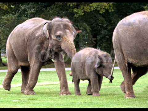 Baby Elephant Walk (piano solo) Hatari soundtrack - Henry Mancini.wmv
