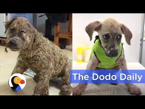 Dog Transformation After Kids Cover Puppy in Glue   Best Animal Videos   The Dodo Daily  Ep 19