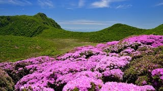 4K ミヤマキリシマ咲く九州の山