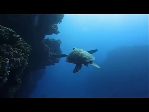 Ocean (Be a predator) Documentary HD