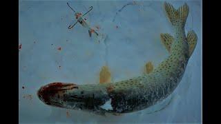 8 Щука которую не снял Рыбалка на Амуре 2019