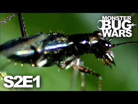 MONSTER BUG WARS | Deadly Duels | S2E1