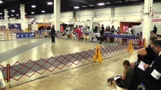 Cdca 7/26/12 National Specialty Best Of Breed Dogs