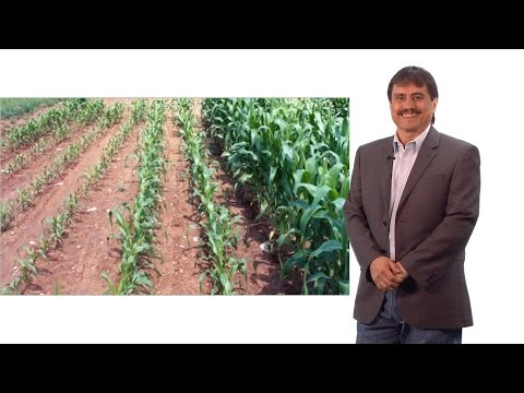 Luis Herrera-Estrella (Langebio) Part 1: Plant nutrition and sustainable agriculture