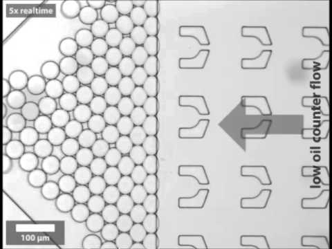 Dynamics of counterion-induced attraction between vimentin filaments followed in microfluidic drops