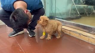 202156 Stray dogs rescue in Wu han China 小徐背负巨大的外债压力比山大却从未放弃过每一只狗狗的治疗。