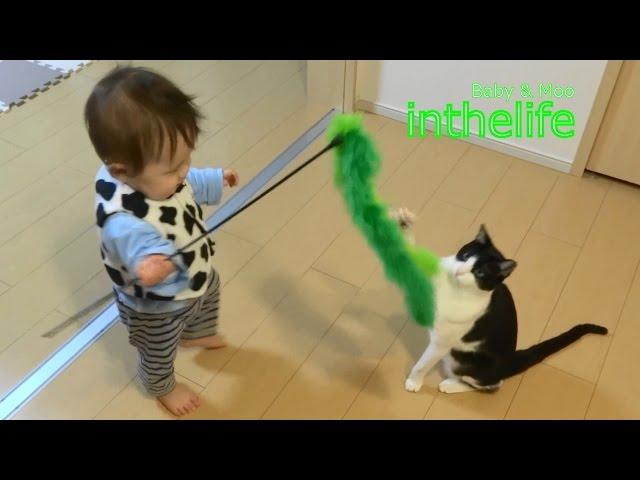 膝取り合戦 その2 弟の逆襲 - It's a Cat Territory Part.2 –