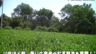 【局アナnet】復活! 八女の地紅茶はいかが(福岡)