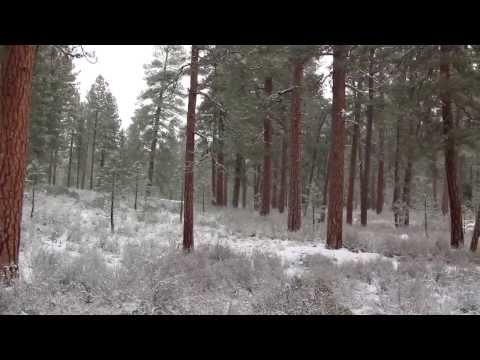 Pacific Ponderosa Pine Forest, OR, USA (polozov 205)