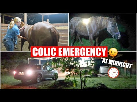 my-horse-colicked!- -midnight-*emergency*