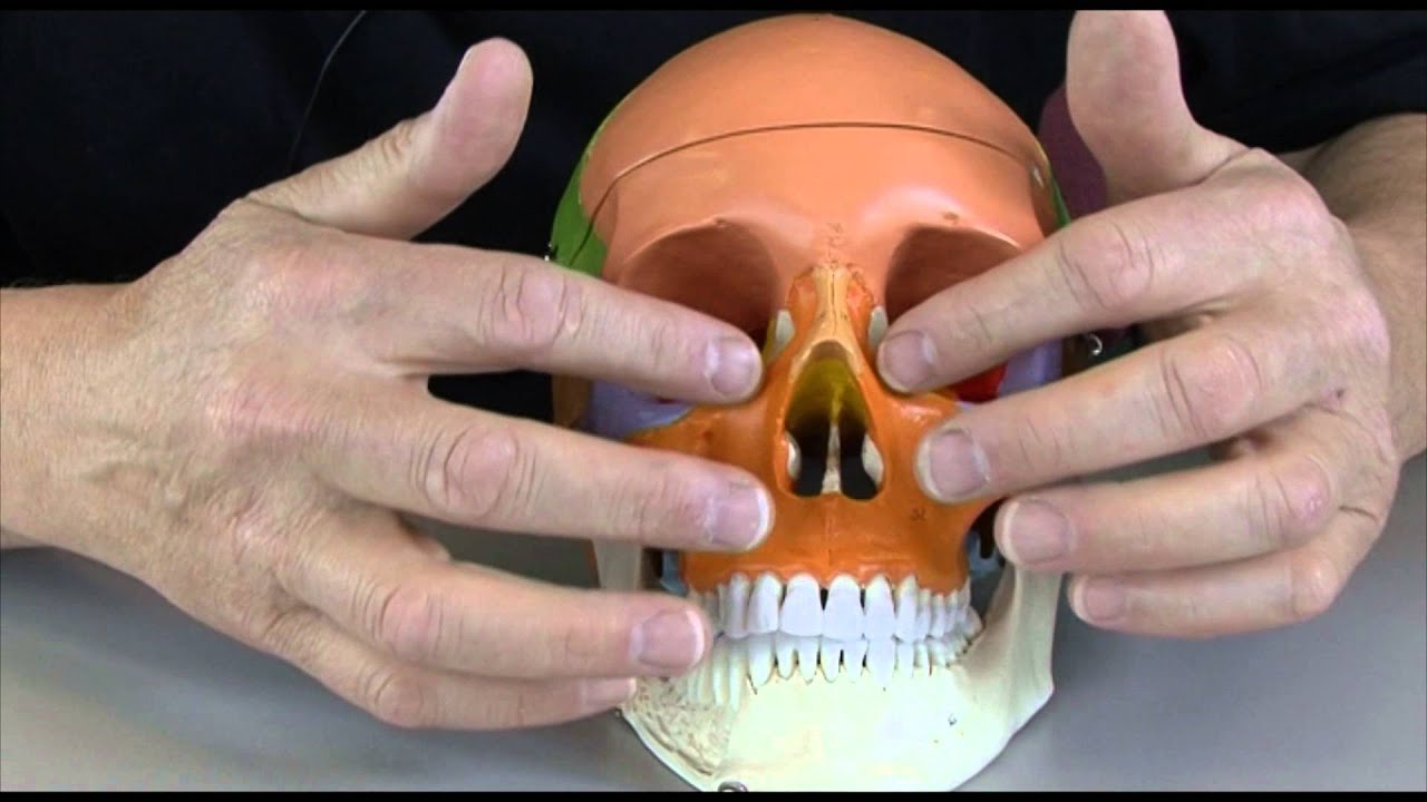 Download Anatomy 3, The Skull