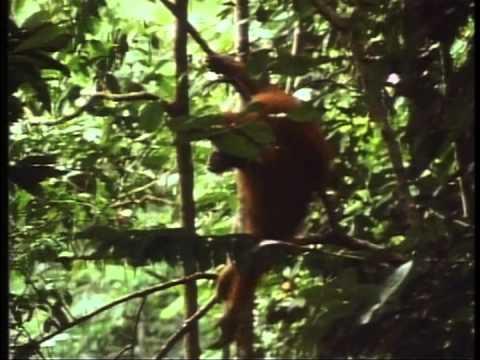 Primate DVD part 1