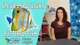 Caring for Marine Butterflyfish: Species Spotlight with Hilary