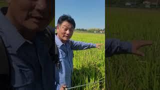 토생팜 게르마늄농법 벼재배