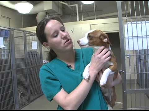 the mary s roberts pet adoption center essay Factors that affect the rating for mary s roberts pet adoption center include: failure to be transparent about ownership, location, or products/services offered bbb reports on.