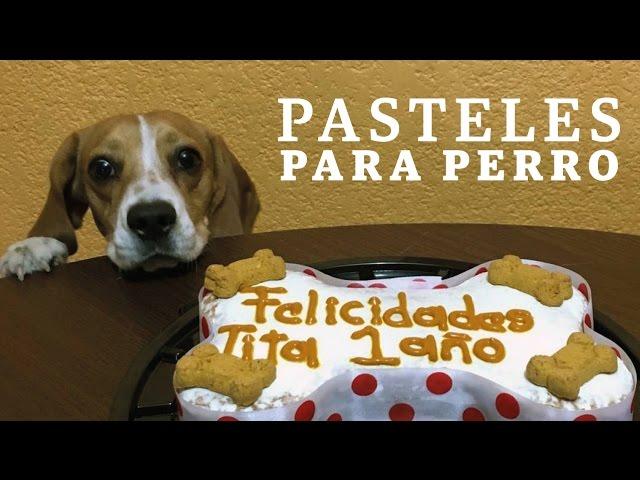 Video Dale Una Sorpresa A Tu Mascota Con Una Fiesta