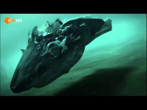 Das Universum der Ozeane  Abtauchen in die größten Tiefen der Weltmeere Teil 4
