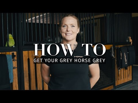 How to: Get your grey horse grey