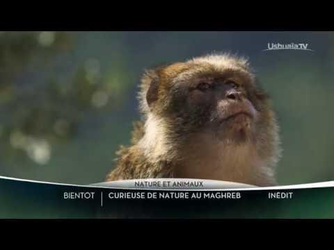 CURIEUSE DE NATURE AU MAGHREB - BANDE ANNONCE