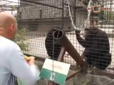 Орангутаны - самы смешные обезьяны (36 фото) » Триникси