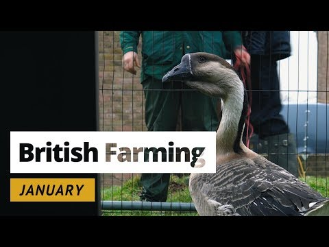 British Farming - 12 Months On A UK Farm: January