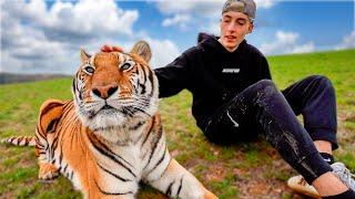Reemplacé A Mi Perro Por Un Tigre...