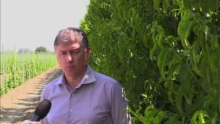 Bayer Crop Science: il pescheto sostenibile