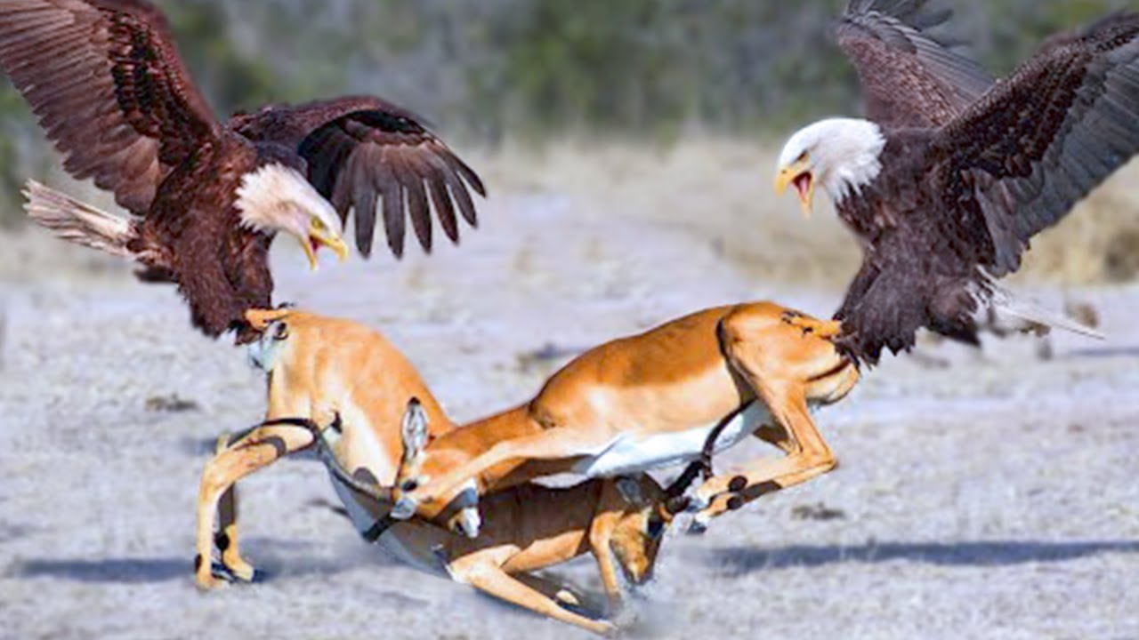15 Most Savage Animal Rivalries in the World