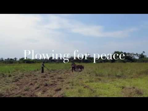 Farming in Congo