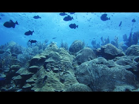 Jeremy Jackson: Can We Save Coral Reefs and If So How?