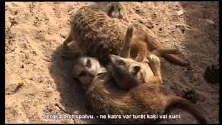 Видео домашних животных