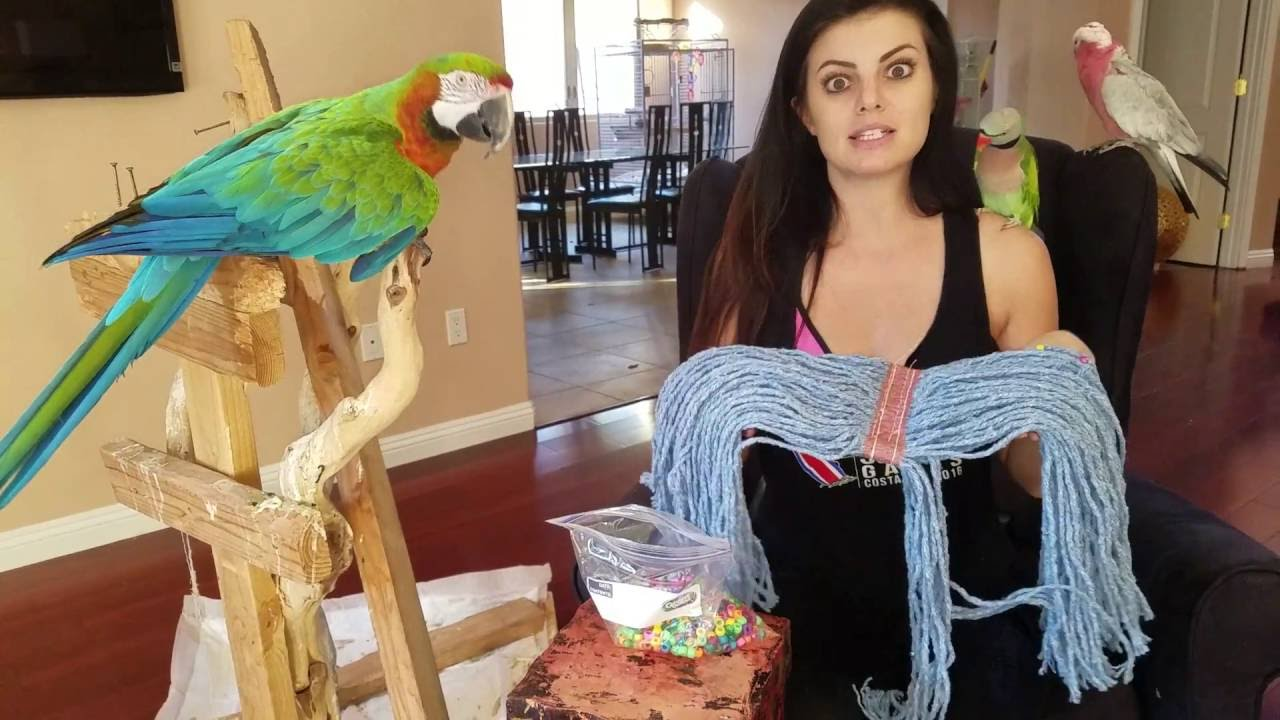A great DIY toy for you parrots